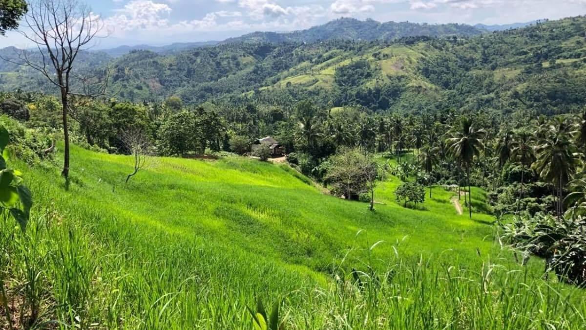 upland_rice_of_mr_romasasa