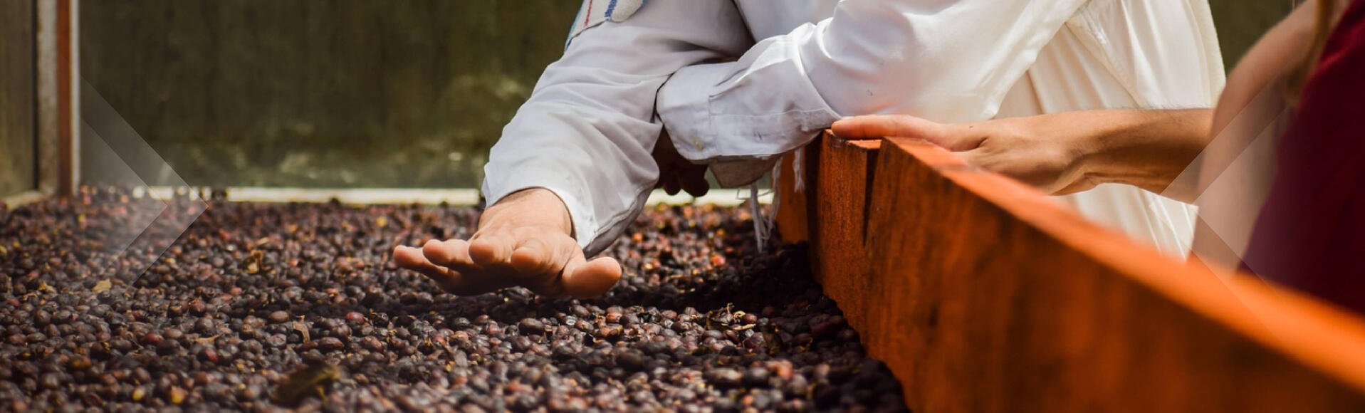 Coffee - sustainability for the love of country and coffee