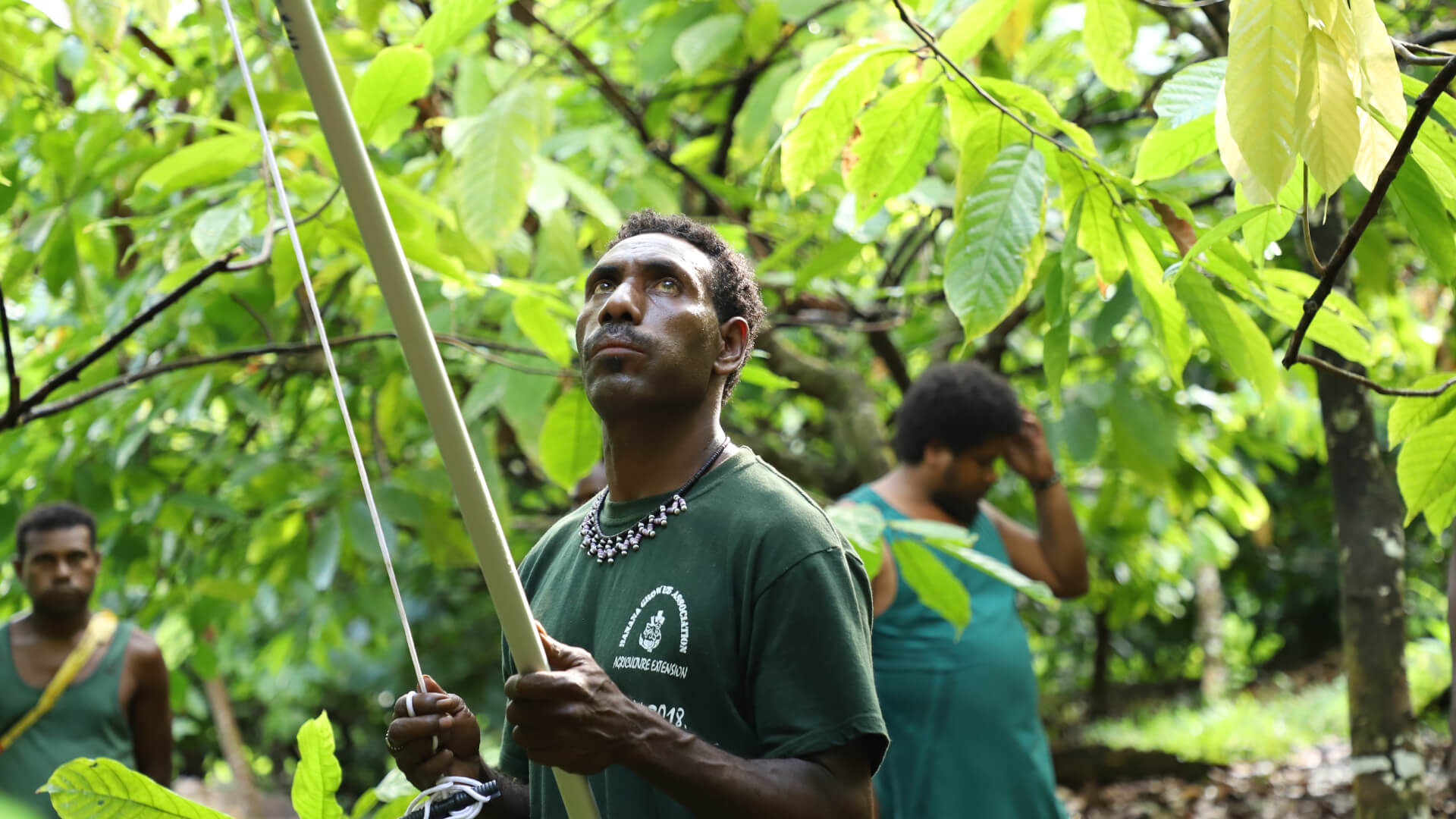 Solomon Island Cocoa