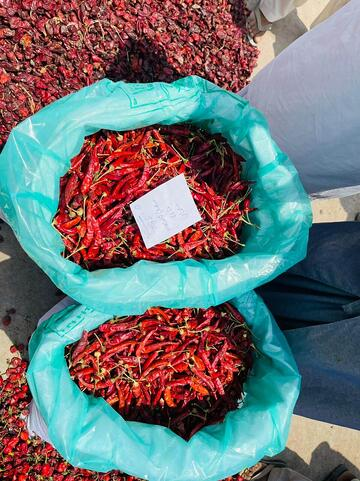 red-chili-stored-in-grainpro-hermetic-bag