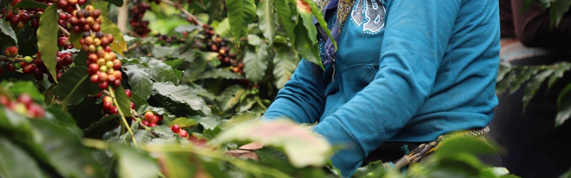 smallholder-coffee
